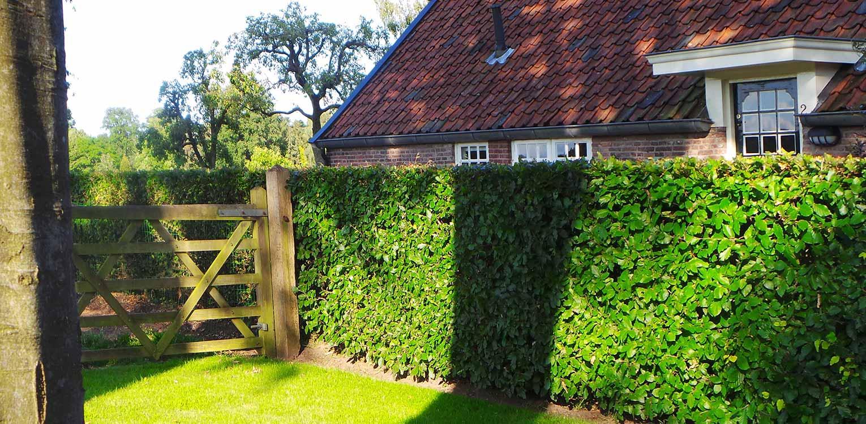 poort in beukenhaag bij boerderijtuin Gorssel. De tuin valt op door zijn sterke concept, eenvoudige vormentaal en mooie verbinding met het bestaande landschap - Denkers in Tuinen.