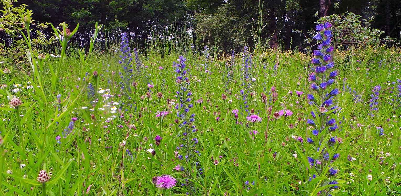 zaaimengsel bloemenweide boerderijtuin Barchem. De sfeer en beplanting sluiten aan bij het landelijke karakter van de plek en dragen er toe bij dat het nu één harmonieus geheel is.