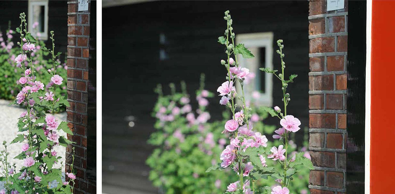 stokrozen boerderijtuin Barchem. De sfeer en beplanting sluiten aan bij het landelijke karakter van de plek en dragen er toe bij dat het nu één harmonieus geheel is.
