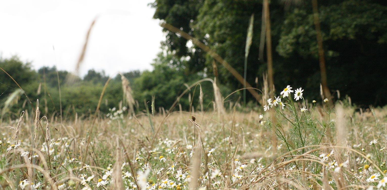 zaaimengsel boerderijtuin Radewijk. In het tuinplan staat de natuurlijke uitstraling centraal en sluit het harmonieus op zijn (bebouwde) omgeving aan Denkers in Tuinen.