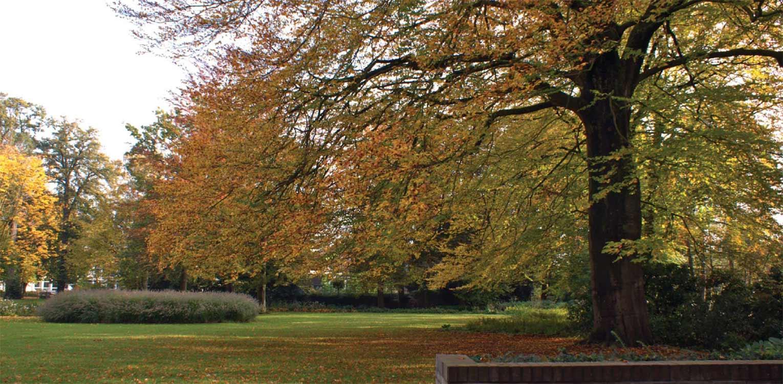 grassen en bomen in herfstkleuren in bedrijfstuin Apeldoorn. De stijlvolle nieuwe tuinaanleg herstelde de oorspronkelijke verbinding met het tegenover gelegen Oranjepark weer Denkers in Tuinen.