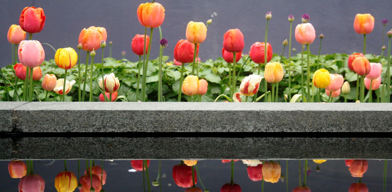 bloembollen tulpenmengsel Fiësta Denkers in Tuinen