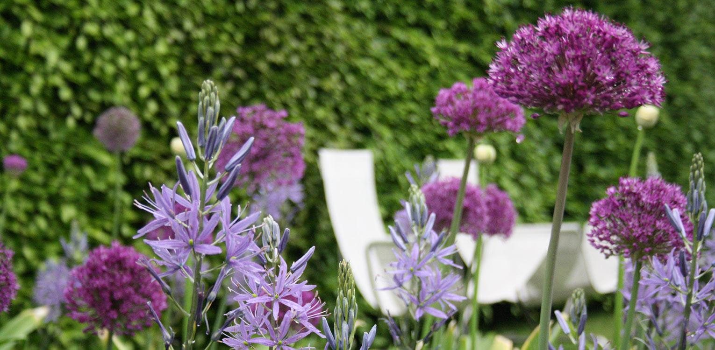 bloembollen sieruien en camassia stadstuin Apeldoorn Denkers in Tuinen