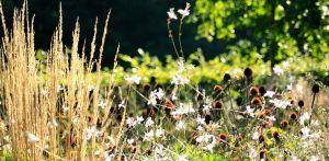prairiebeplanting prairieborder Denkers in Tuinen