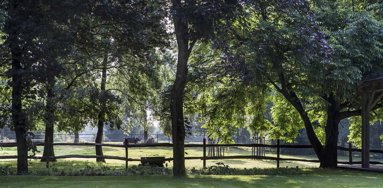 boerderijtuin Eibergen vroeg m.n. om nieuwe structuur door het opstellen van een totaalplan met veel nieuwe zichtlijnen en verbindingen: hier over het landelijke hekwerk richting de achtergelegen stuw - Denkers in Tuinen.