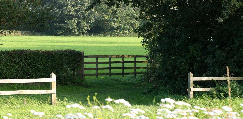 sfeerbeeld beplantingen landschappelijke tuin Heerde waar ontwerp bepaald is door de openheid van het open ontginningslandschap met zijn noord-zuid relaties - Denkers in Tuinen