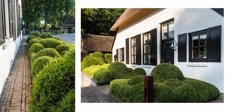 buxusblob boerderijtuin Nijverdal. Er is eenheid en stijl in de aanwezige verrommeling gebracht en kunnen de pony's rondom tot aan de woning komen Denkers in Tuinen.