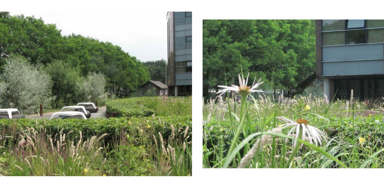 beplanting daktuin Hilversum. Kijk- en gebruikstuin met een groot houten terras dat geheel door massaal toegepaste prairiebeplanting is omgeven Denkers in Tuinen.