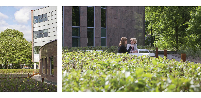 beukenhagen daktuin Hilversum. Kijk- en gebruikstuin met een groot houten terras dat geheel door massaal toegepaste prairiebeplanting is omgeven Denkers in Tuinen.