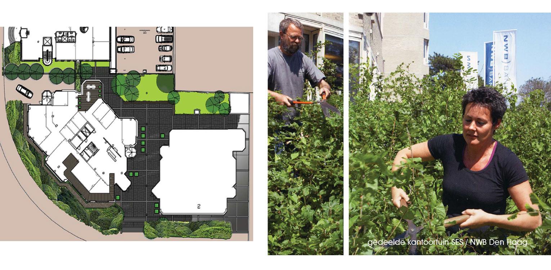 schetsontwerp kantoortuin Den Haag. Massale aanplant van vormgesnoeide beuk heeft tot een fraai aaneengesloten groen en golvend landschap geleid Denkers in Tuinen