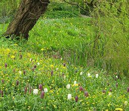 landschappelijke tuin Hoevelaken