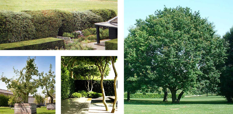 sfeerbeelden landschappelijke tuin Hoevelaken Heldere opzet waar nieuwe en moderne architectuur een relatie aangaat met het 'oude' omliggende landschap Denkers in Tuinen