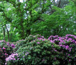 landschappelijke tuin Ommen