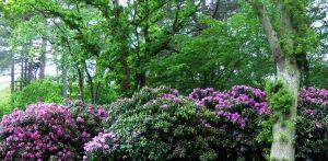 landschappelijke tuin Ommen. Gesloten aan entree zijde met o.m. zware aanplant rhododendron, maar zich magistraal openend aan de achterzijde naar het omliggende landschap - Denkers in Tuinen