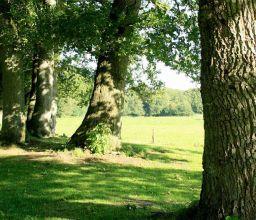 landschappelijke tuin Veluwe