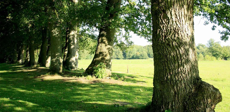landschappelijke tuin Wenum Wiesel waar door het vrijzetten van de uitgegroeide houtwal prachtig zicht kwam op het achterliggend landschap Denkers in Tuinen