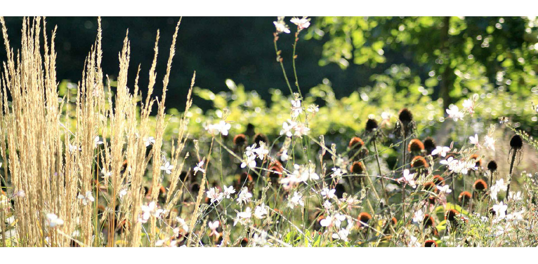 prairiebeplanting landschappelijke tuin Wenum Wiesel waar door het vrijzetten van de uitgegroeide houtwal prachtig zicht kwam op het achterliggend landschap Denkers in Tuinen