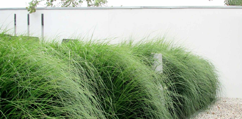 grassenborder voor witte tuinmuur in villatuin Dronten. Tuin aan de polderrand van Dronten, gekoppeld aan het omliggende polderlandschap met noodzakelijke windbeschutting - Denkers in Tuinen