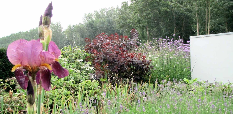 kleurrijke border villatuin Dronten met witte tuinmuur. Tuin aan de polderrand van Dronten, gekoppeld aan het omliggende polderlandschap met noodzakelijke windbeschutting - Denkers in Tuinen