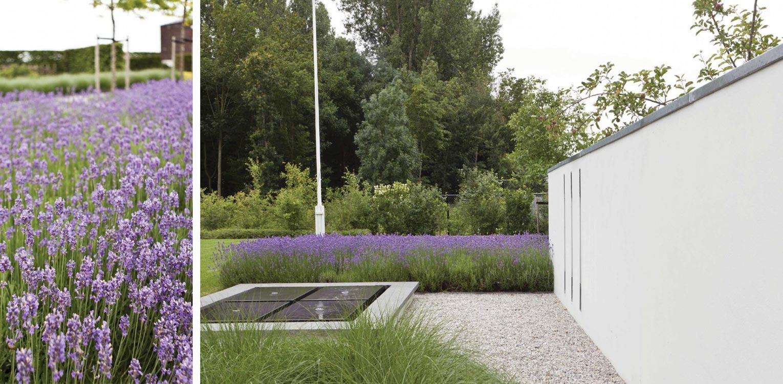 lavendel bij waterelement en witte tuinmuur bij villatuin Dronten. Tuin aan de polderrand van Dronten, gekoppeld aan het omliggende polderlandschap met noodzakelijke windbeschutting - Denkers in Tuinen