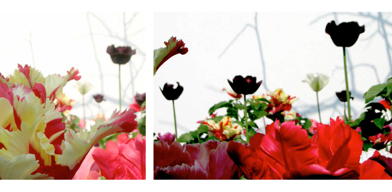 Moderne stadstuin in hartje Apeldoorn met bonte tulpen tegen witte muur. Rust en sfeer zijn hier leidend geweest met een perfecte aansluiting tussen in- en exterieur - Denkers in Tuinen