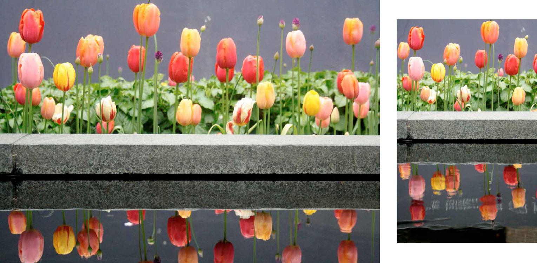 voorjaars tulpen in moderne stadstuin in hartje Apeldoorn. Rust en sfeer zijn hier leidend geweest met een perfecte aansluiting tussen in- en exterieur - Denkers in Tuinen
