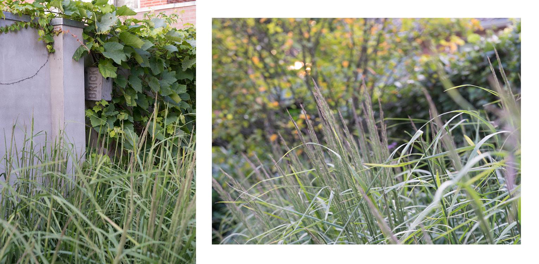 Grassenborder en druif in patiotuin Diepenveen. Het in de woning toegepaste beton is consequent in de buitenruimte doorgetrokken - mede als podium voor kunst - Denkers in Tuinen