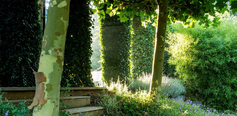 platanen en klimopbogen bij border villatuin Naarden. In het strakke en moderne tuinontwerp zijn enkele niet alledaagse grote 'spannende' lijnen en elementen opgenomen - Denkers in tuinen.