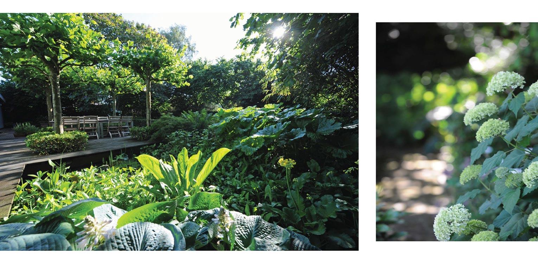 vlonder met dakplatanen en moerasdeel villatuin Warnsveld. Helderheid rust en eenvoud kenschetsen dit tuinontwerp, waarbij de beplanting een tijdloze, groene hoofdrol vervuld. Denkers in Tuinen.