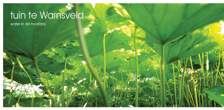 massaal schildkruid in villatuin Warnsveld. Helderheid rust en eenvoud kenschetsen dit tuinontwerp, waarbij de beplanting een tijdloze, groene hoofdrol vervuld. Denkers in Tuinen.