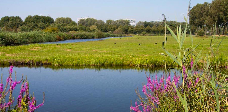 landschappelijke tuin Sloten waar de sfeer van het achterliggend natuurpark 'de Vrije Geer' tot ver in de tuin voelbaar is naast veel bloemrijke borders Denkers in Tuinen.