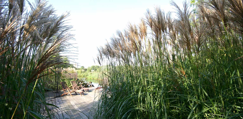 tuinontwerp landschappelijke tuin sloten grassen