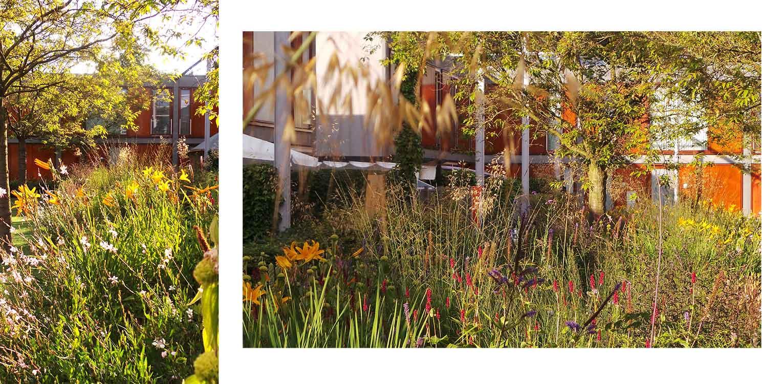 prairieborder binnentuin Dennenkamp Apeldoorn waar een lange strip prairiebeplanting het tamelijk kleurloos en weinig vitale binnenterrein omgevormd heeft naar een uitbundig en kleurrijk geheel - Denkers inTuinen