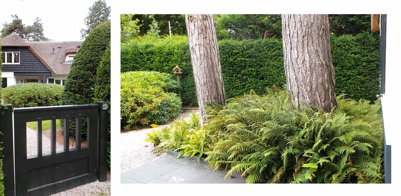 entree villatuin Aerdenhout waar de tuin in gelijke (bos)sfeer met de strakke renovatie van de woning is getrokken- Denkers in Tuinen