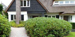 rhododendron entreezijde villatuin Aerdenhout waar de tuin in gelijke (bos)sfeer met de strakke renovatie van de woning is getrokken- Denkers in Tuinen