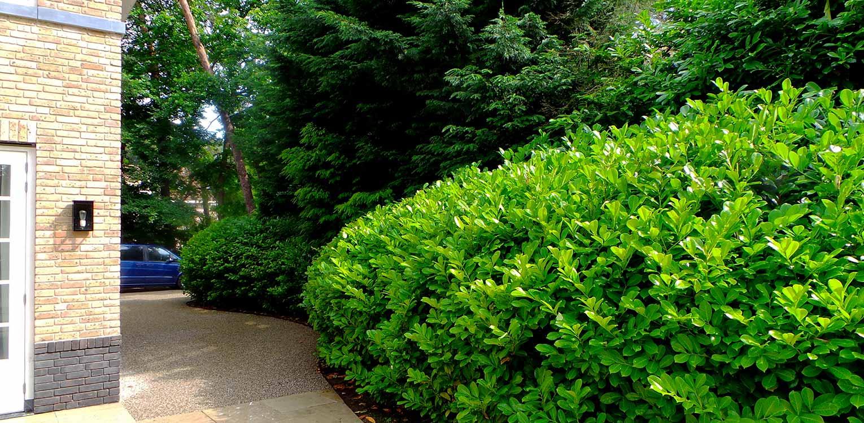 laurierblob villatuin Bilthoven - door gericht gebruik van laurier 'blobs' wordt op een boskavel een overgangsgebied tussen openbaar en privé gecreëerd - Denkers inTuinen