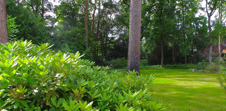 vrijstaande bomen en vliegdennen villatuin Bilthoven - door gericht gebruik van laurier 'blobs' wordt op een boskavel een overgangsgebied tussen openbaar en privé gecreëerd - Denkers inTuinen
