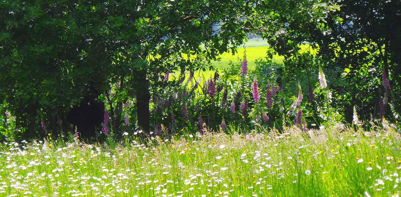 zaaimengsel villatuin Holten. De doorMaas architecten nieuw aangebrachte openheid is 1 op 1 in het tuinontwerp doorgetrokken - Denkers in Tuinen.