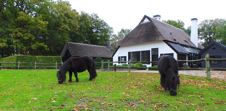 Ponyweide bij boerderijtuin Nijverdal. Er is eenheid en stijl in de aanwezige verrommeling gebracht en kunnen de pony's rondom tot aan de woning komen Denkers in Tuinen.